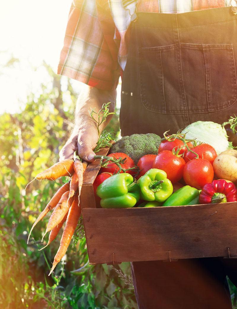 Farmer with freshly grown vegetables